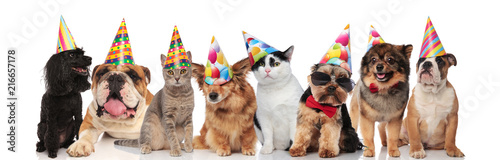 Fotografia adorable team of birthday pets of different breeds