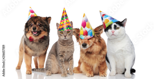 Group Of Four Funny Cats And Dogs With Birthday Hats