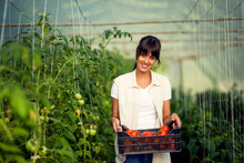 Young Woman Holding Box Of Fresh Organic Tomatoes