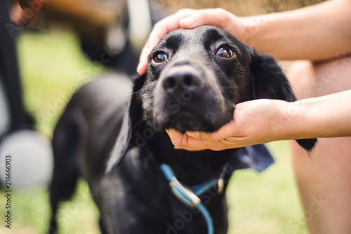 Fotografía  Male hands holding a head of a dog outdoors in summertime