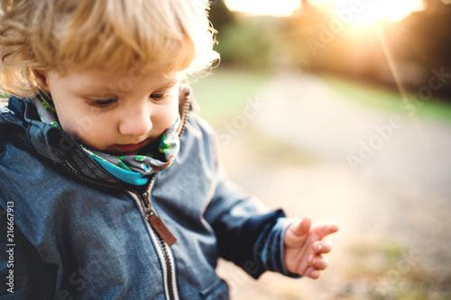 Pinturas sobre lienzo  A little toddler boy standing outdoors in nature at sunset