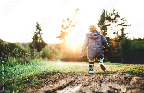 Fotografía  A little toddler boy walking outdoors in nature at sunset