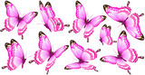 Fototapeta Motyle - beautiful pink butterflies, isolated  on a white