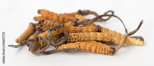 Foto group of Ophiocordyceps sinensis or mushroom cordyceps this is a herbs on isolated background