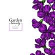 Violet flower drawing. Vector hand drawn floral frame. Viola border sketch.