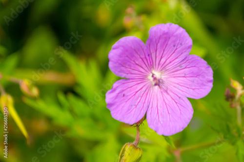 Papiers peints Azalea View from close range on azalea purple pink
