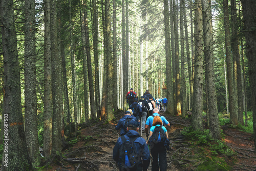 Canvas-taulu big group of hikers on the mountain trail in the Carpathian forest