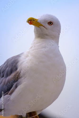 Staande foto Struisvogel Gulls on the Sea of Marmara in Istanbul
