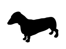 Dachshund Stands, Dog, Silhouette, Vector