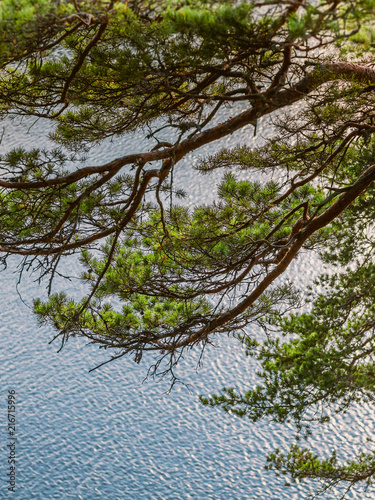 Fotobehang Bomen View of the surface of the water because of the branches of spruce