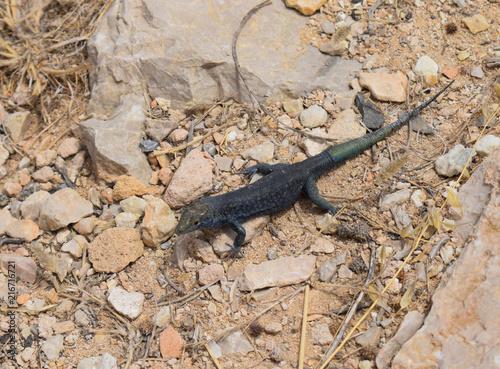 Foto op Plexiglas Krokodil Eidechse
