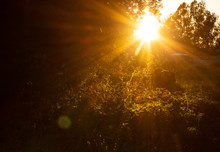 Sunflare Sunset