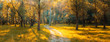Panorama in the forest during sunset. Sun rays coming through the trees. Summer days in the forest