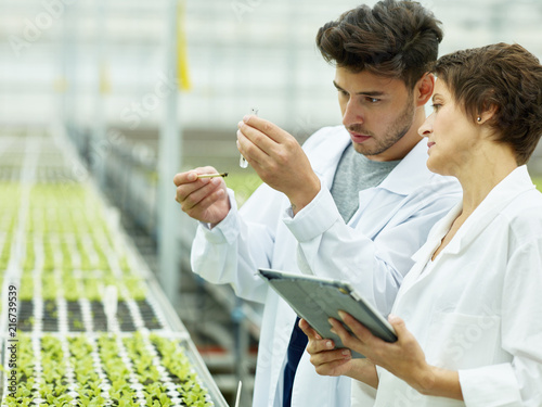 Stampa su Tela Coworking scientists in agricultural complex