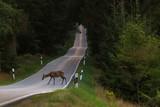 Fototapeta Zwierzęta - a deer on country road