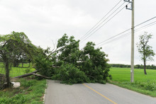Large Tree Fallen And Block Th...