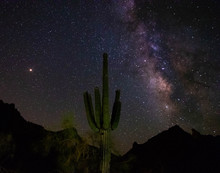 Saguaro Cactus And Milky Way