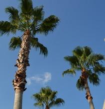 Palms Trees In Blue Sky