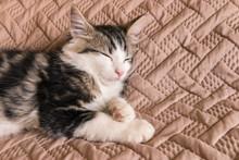 Tabby Kitten Sleeping On Brown Duvet Cover