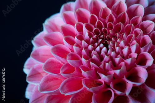 Cadres-photo bureau Dahlia beautiful pink dahlia