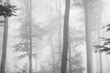 Jesień czarno-biały las - 216766760