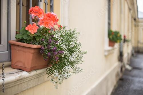 Printed kitchen splashbacks Narrow alley Flowers in pot on old window
