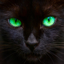Muzzle Of A Cute Black Cat With Bright Green Eyes Closeup