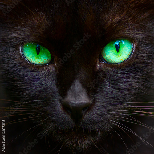 Muzzle Of A Cute Black Cat With Bright Green Eyes Closeup Buy This