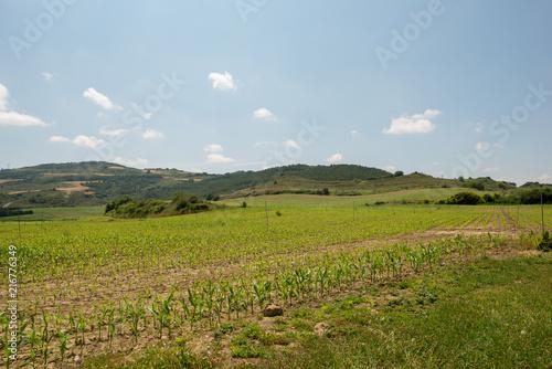 Poster Blauwe hemel Green landscape along the road of santiago de navarra