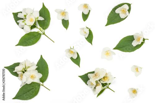 Jasmine flowers isolated on white Wallpaper Mural