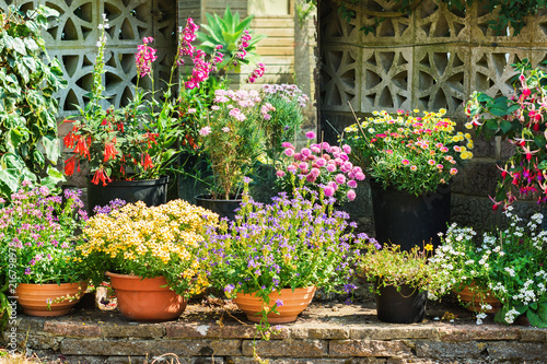 Beautiful Backyard Garden Full Of Colorful Flowers In Pots And