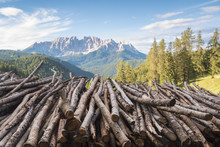 Woodpile With Latemar, Val D'E...