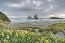 Yellow Flowers And Moody Sky With Archway Islands In The Background. Wharariki Beach, Puponga, Tasman District, South Island, New Zealand.