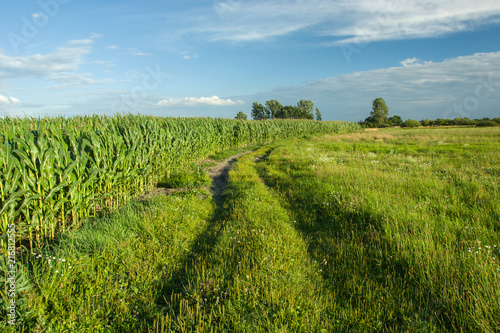 Keuken foto achterwand Weide, Moeras Dirt road in the meadow, corn field and blue sky