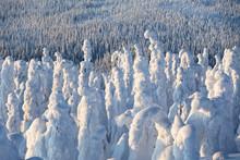 Frozen Forest, Riisitunturi Na...