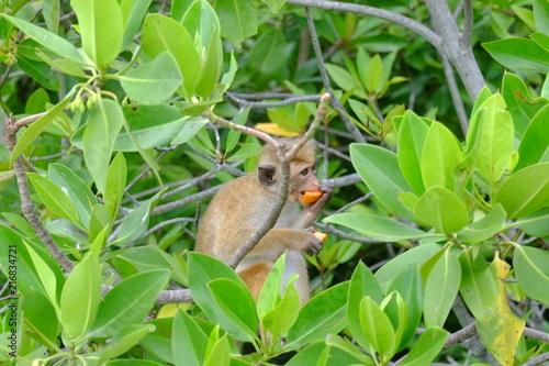Foto op Plexiglas Aap Singe qui mange une papaye