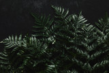 top view of beautiful green wet fern on black - 216835563