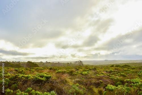 Poster Oceanië Nature Scene of Vast Green Fields During Sunset Near the Great Ocean Road