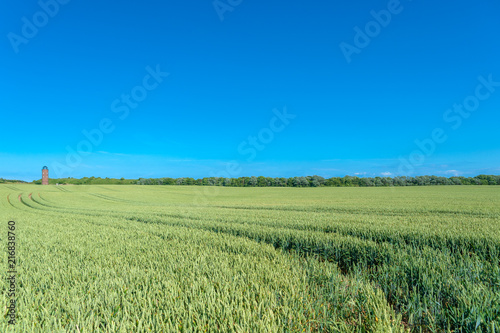Staande foto Blauwe jeans Landscape with cornfield and former Marinepeilturm tower at Cape Arkona