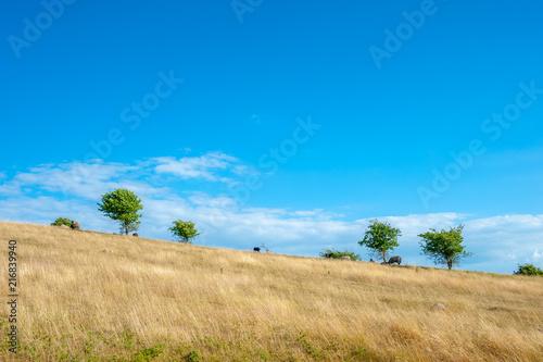 Foto op Aluminium Blauw Countryside at Cape Arkona