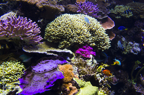 Foto op Canvas Onder water Coral fish in the deep blue sea