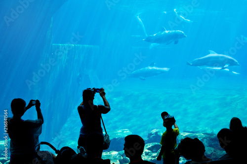 dolphins in a swimming pool, dolphin show watching by the silhouettes of the visitors
