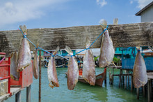 Traditional Salt Dried Fish Hanging And Drying Under The Sun