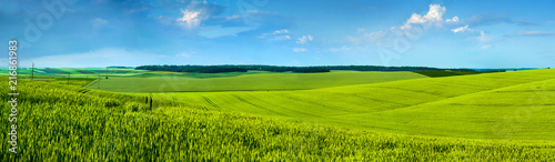 Obraz na plátně  Panoramic view of beautiful yellow-green field hils with blue sky