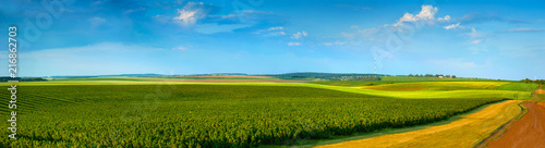 Fotobehang Cultuur panoramic view of black currant plantations and agricultural lands with road
