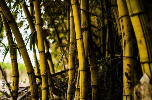 Poster Bamboe paisagens do dia a dia