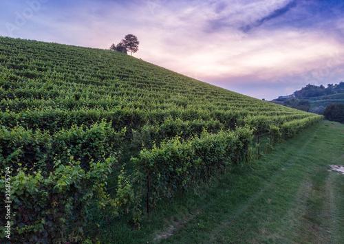 Spoed Foto op Canvas Khaki Aerial shots of italian wineyards