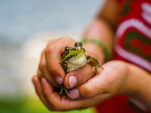 Child Catching Frog