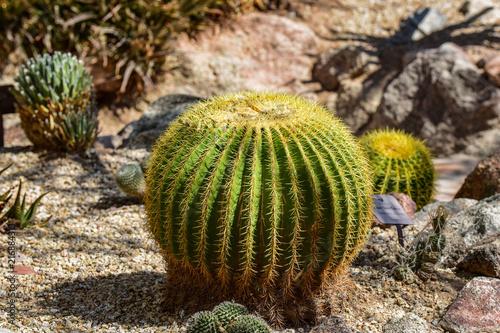 Tuinposter Cactus Arizona