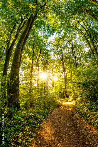 Tuinposter Weg in bos Path through the forest lit by golden sun rays